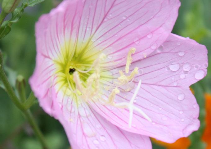 Flower,2009.6.6